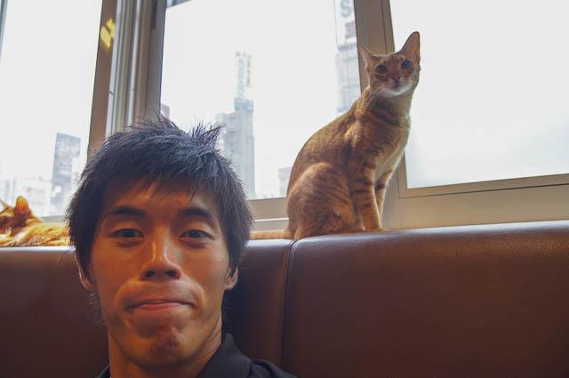 癒されすぎに注意!東京の新宿にある猫カフェに行ってきた!